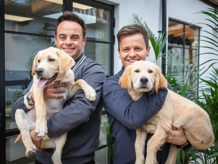 Meet Guide Dogs Ant and Dec!